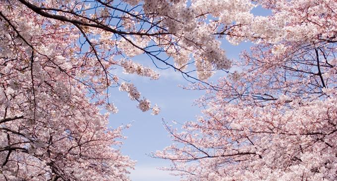 お花見デートスポット2014